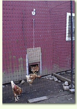 Hidden Meadow Farm Automatic Chicken Door